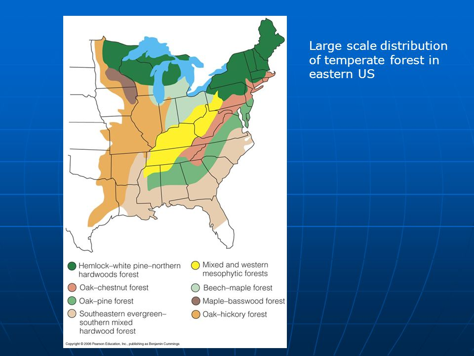 Large scale distribution of temperate forest in eastern US