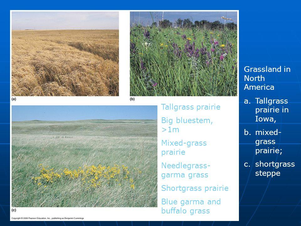 Grassland in North America