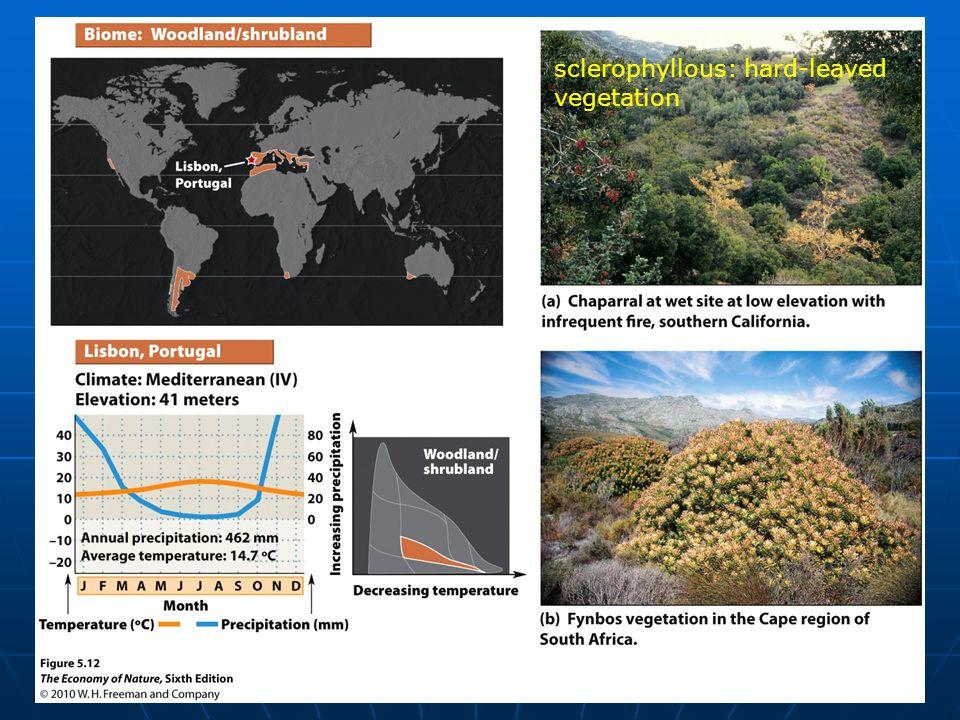 sclerophyllous: hard-leaved vegetation