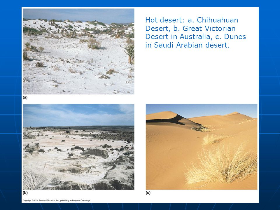 Hot desert: a. Chihuahuan Desert, b