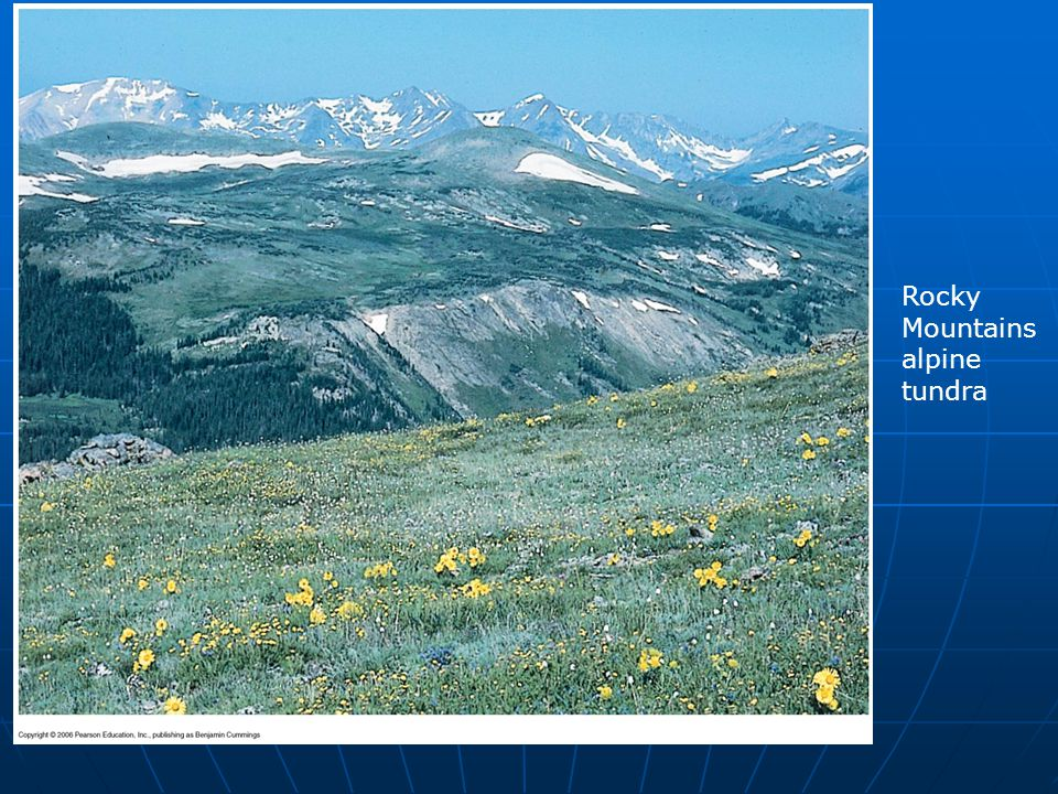 Rocky Mountains alpine tundra