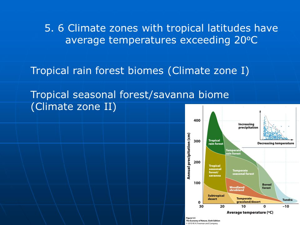 Tropical rain forest biomes (Climate zone I)