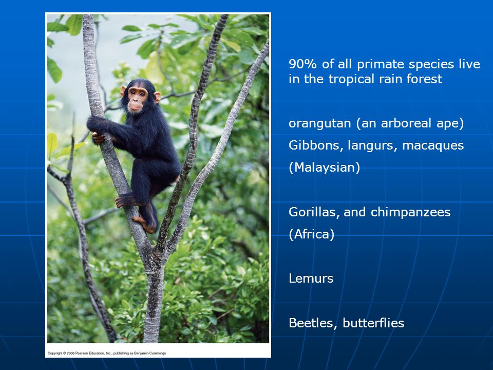 90% of all primate species live in the tropical rain forest