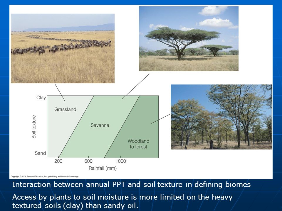 Interaction between annual PPT and soil texture in defining biomes