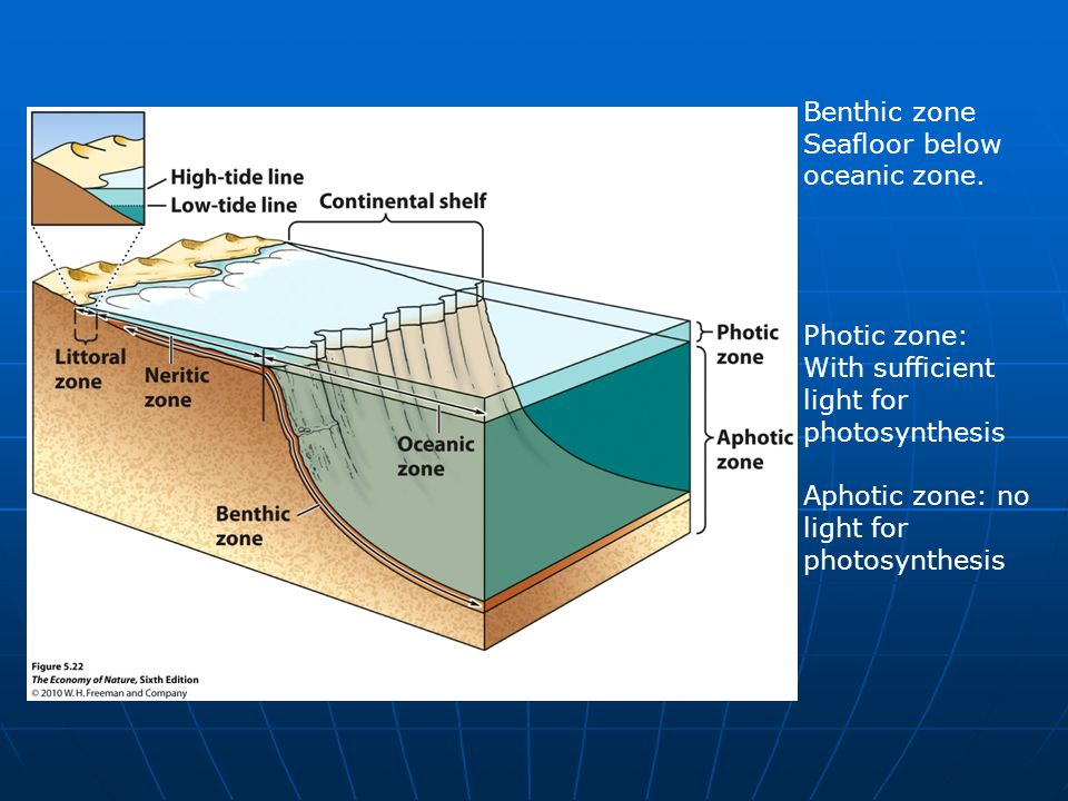 Seafloor below oceanic zone.