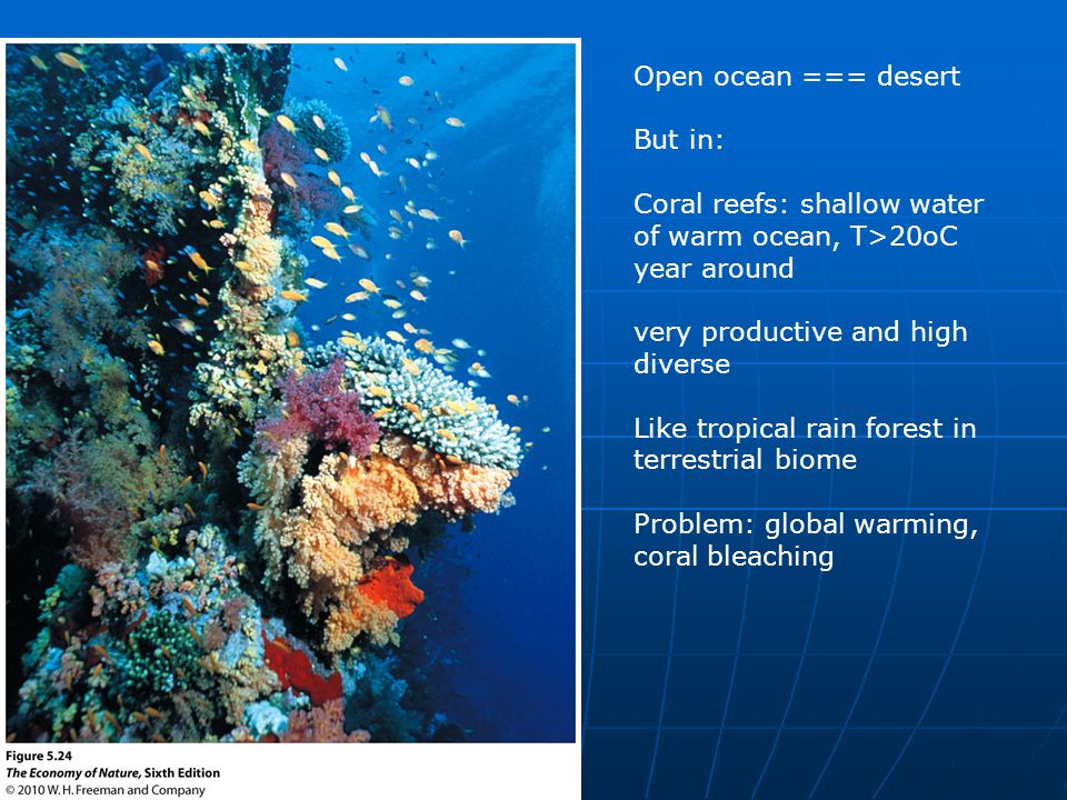 Coral reefs: shallow water of warm ocean, T>20oC year around