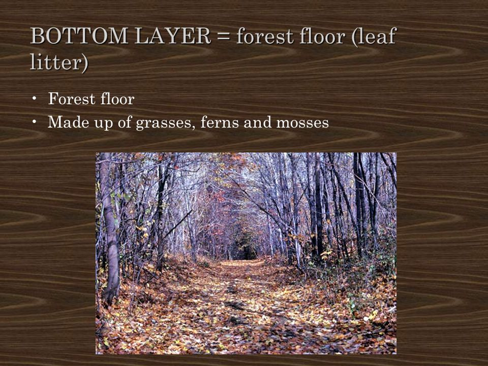 BOTTOM LAYER = forest floor (leaf litter)