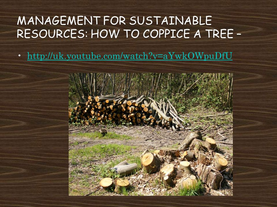 Management for sustainable resources: How to Coppice a Tree –