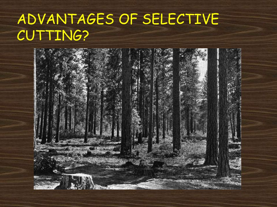 Advantages of Selective Cutting
