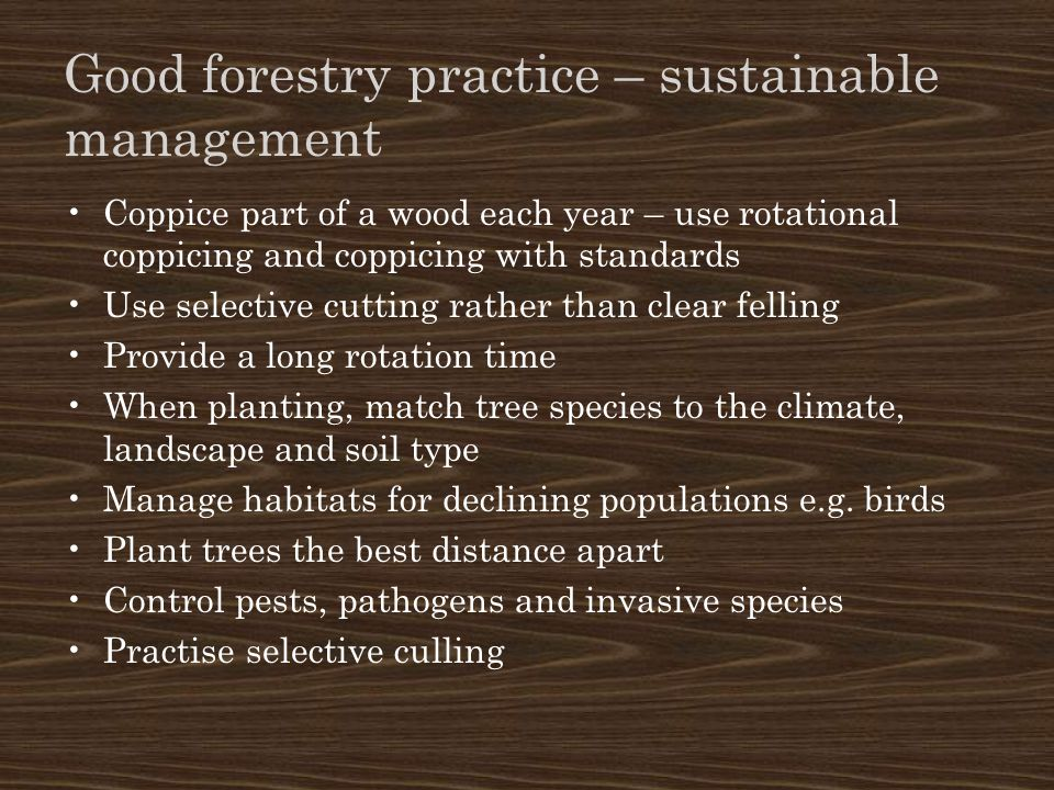 Good forestry practice – sustainable management