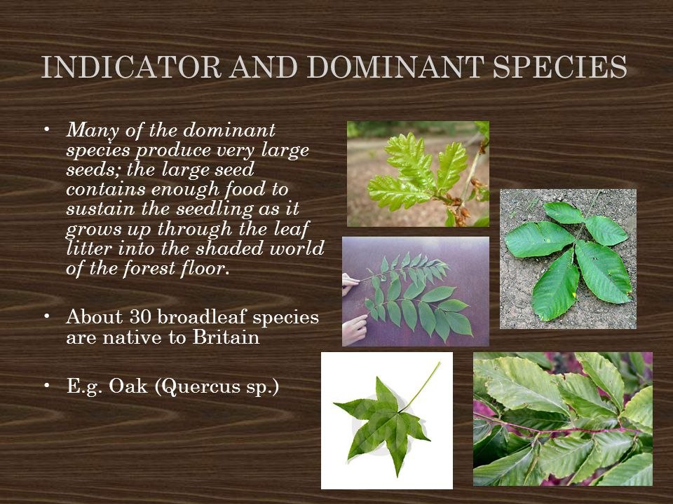Indicator and Dominant Species