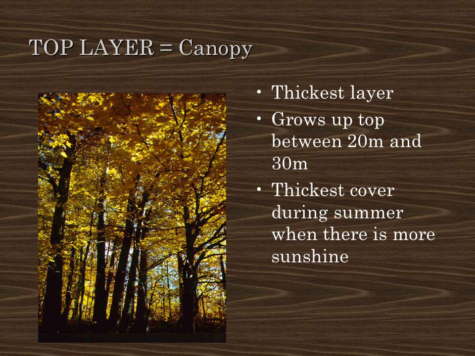 TOP LAYER = Canopy Thickest layer Grows up top between 20m and 30m