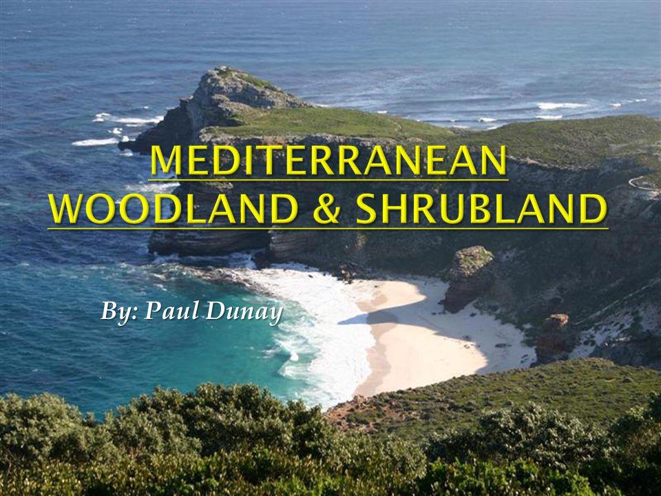 Mediterranean Woodland & Shrubland