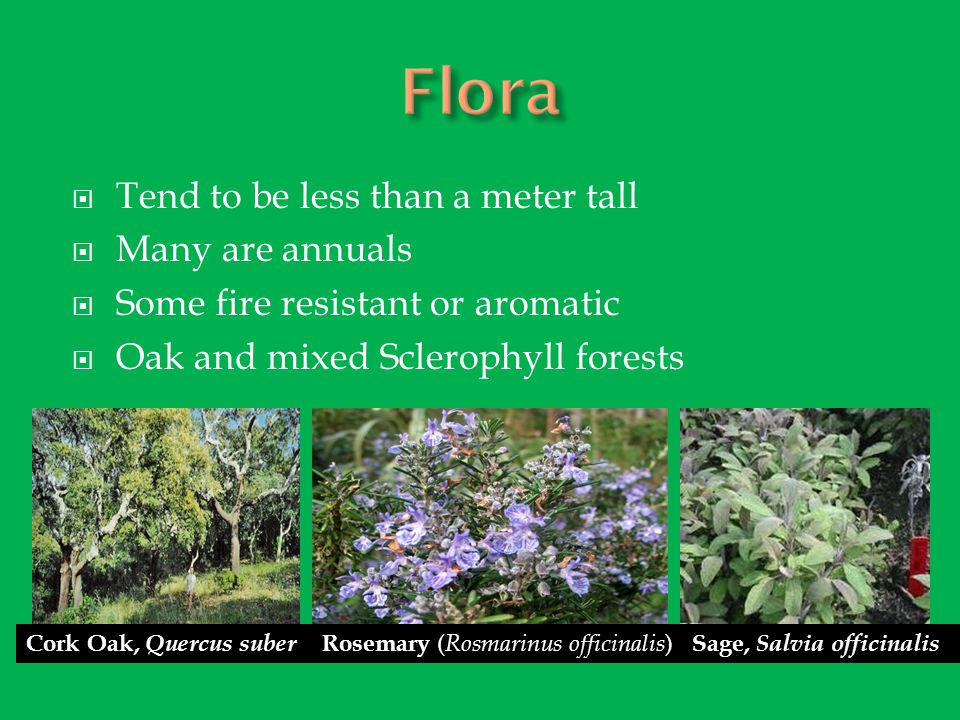 Flora Tend to be less than a meter tall Many are annuals