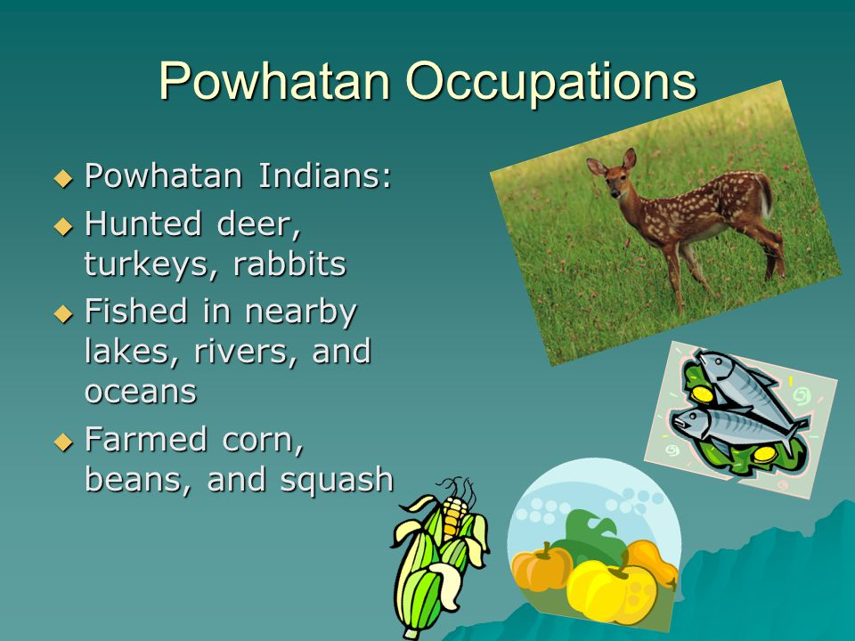 Powhatan Occupations Powhatan Indians: Hunted deer, turkeys, rabbits
