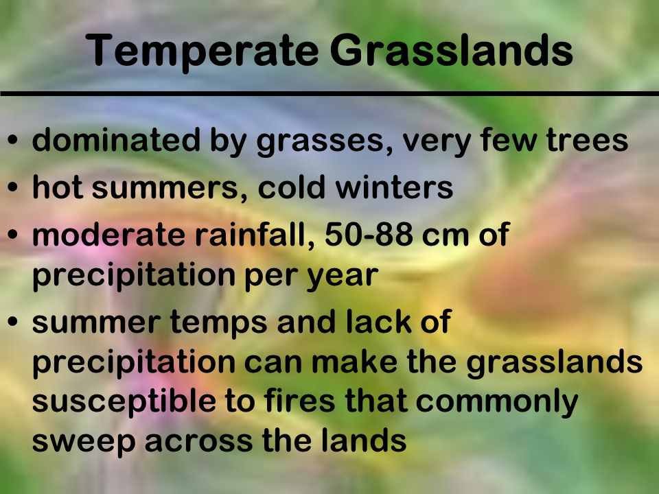 Temperate Grasslands dominated by grasses, very few trees