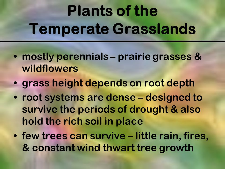 Plants of the Temperate Grasslands