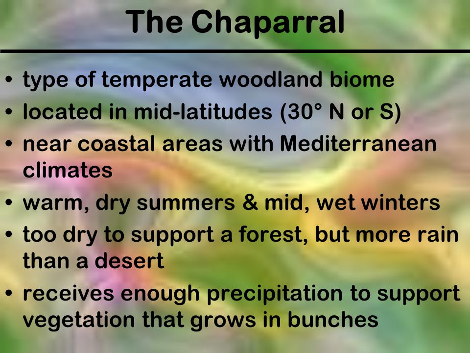 The Chaparral type of temperate woodland biome