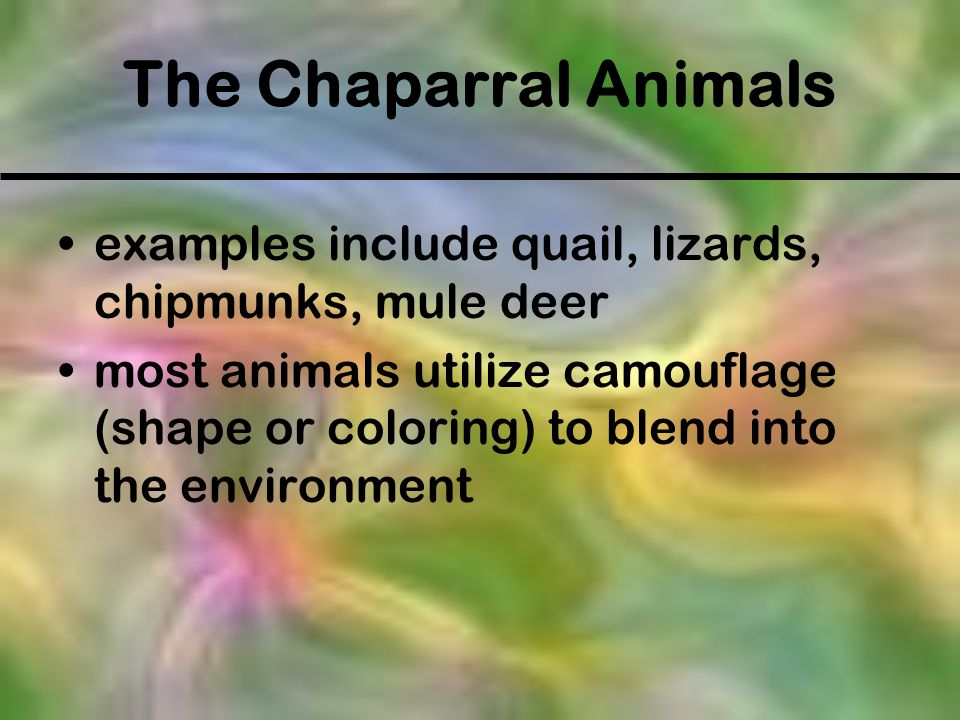 The Chaparral Animals examples include quail, lizards, chipmunks, mule deer.