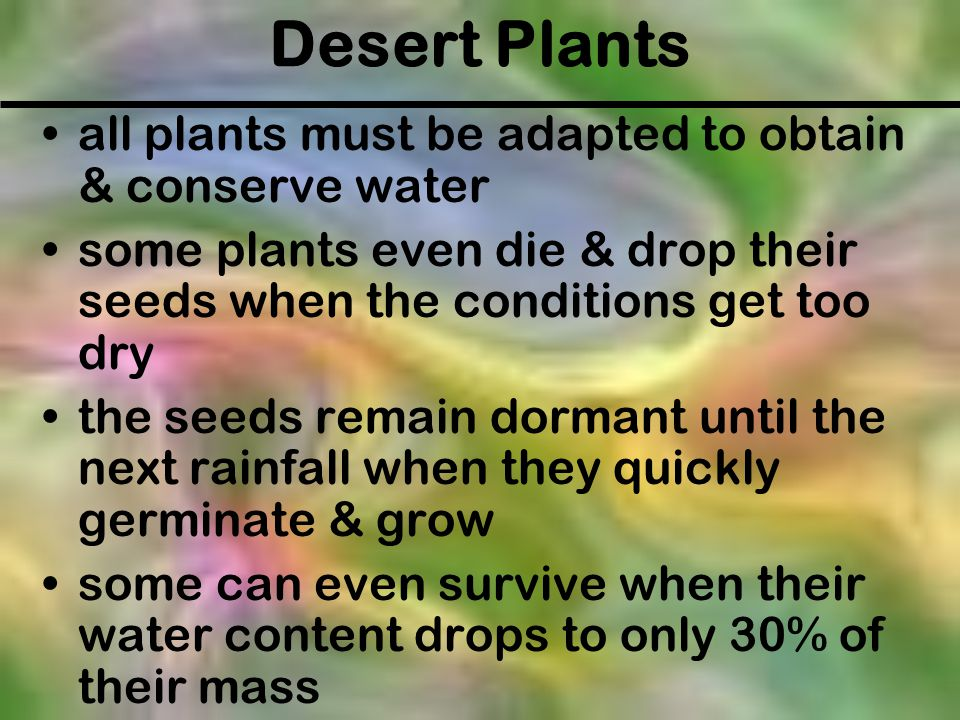 Desert Plants all plants must be adapted to obtain & conserve water