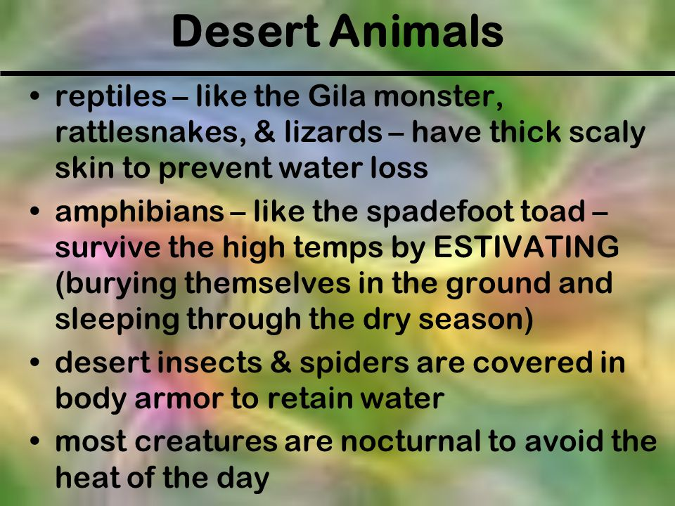 Desert Animals reptiles – like the Gila monster, rattlesnakes, & lizards – have thick scaly skin to prevent water loss.