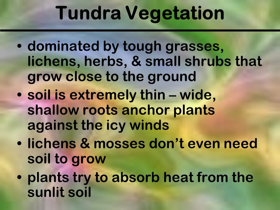 Tundra Vegetation dominated by tough grasses, lichens, herbs, & small shrubs that grow close to the ground.