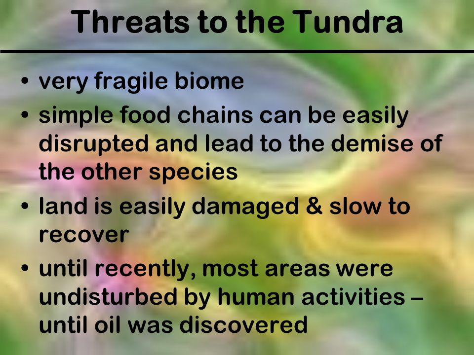 Threats to the Tundra very fragile biome