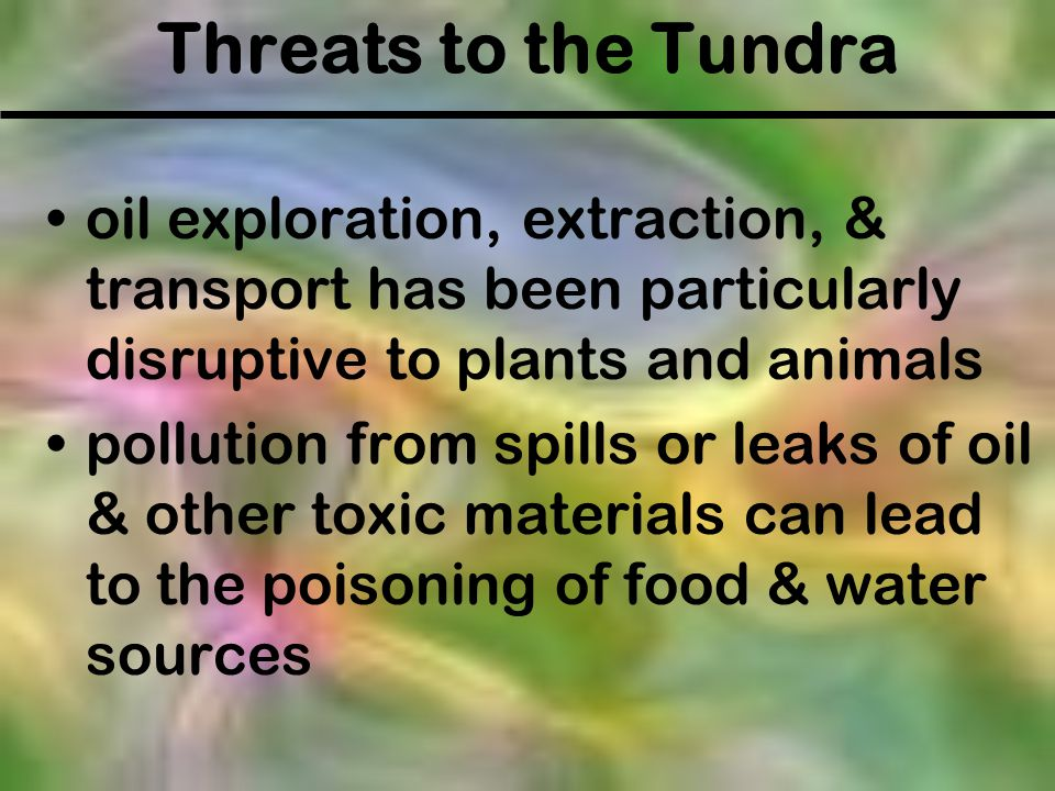 Threats to the Tundra oil exploration, extraction, & transport has been particularly disruptive to plants and animals.