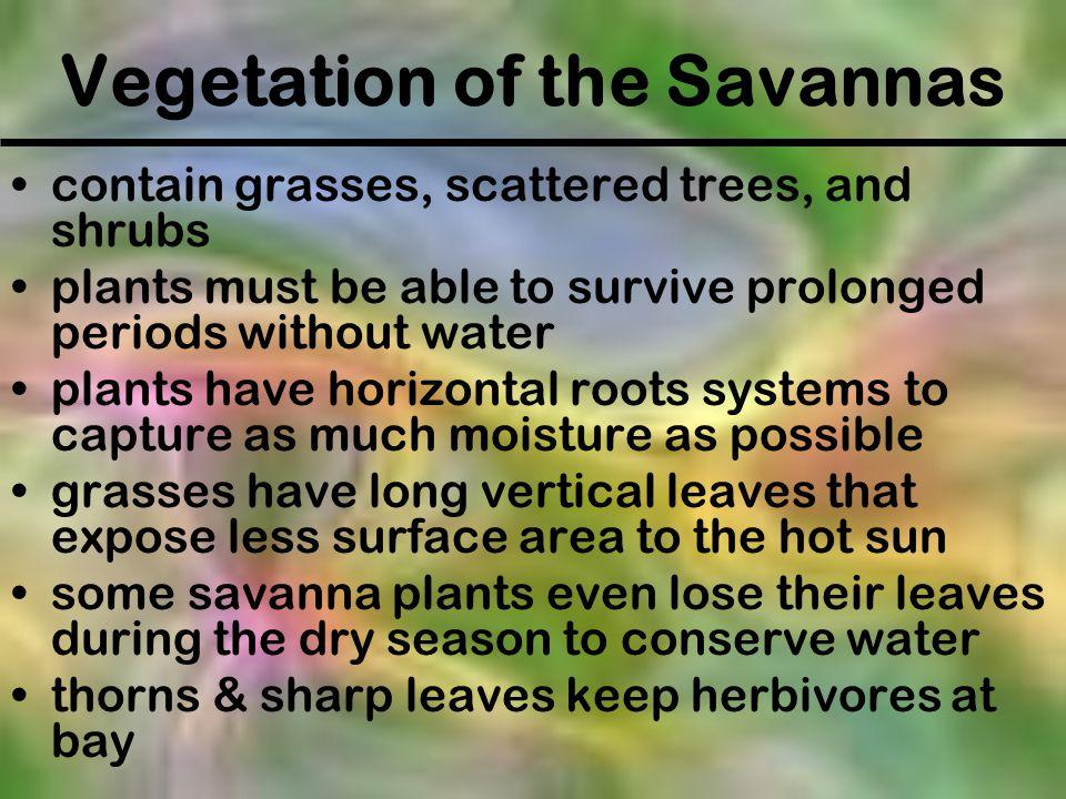 Vegetation of the Savannas
