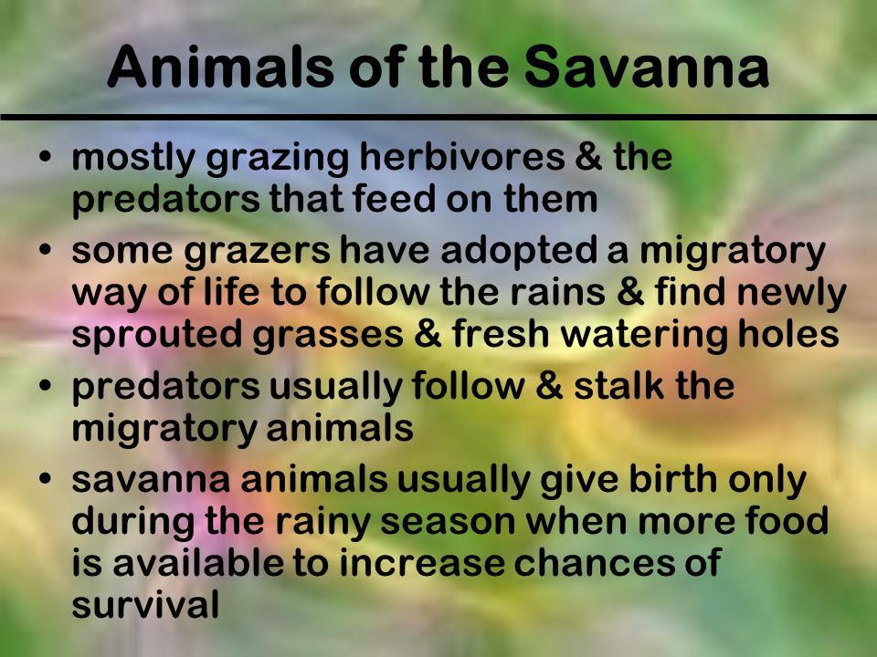 Animals of the Savanna mostly grazing herbivores & the predators that feed on them.