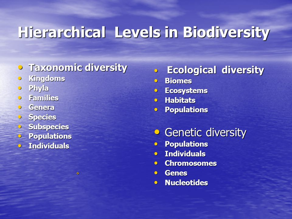Hierarchical Levels in Biodiversity