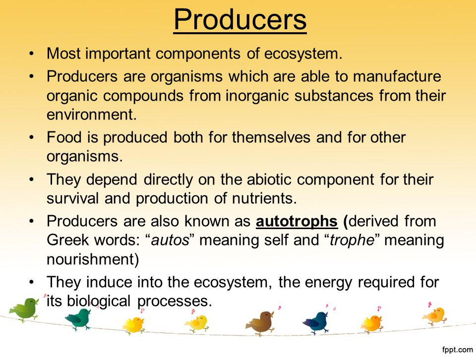 Producers Most important components of ecosystem.