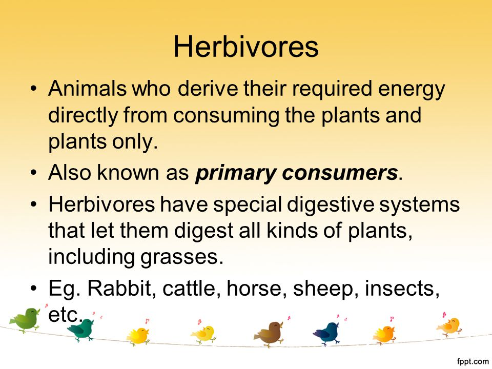 Herbivores Animals who derive their required energy directly from consuming the plants and plants only.
