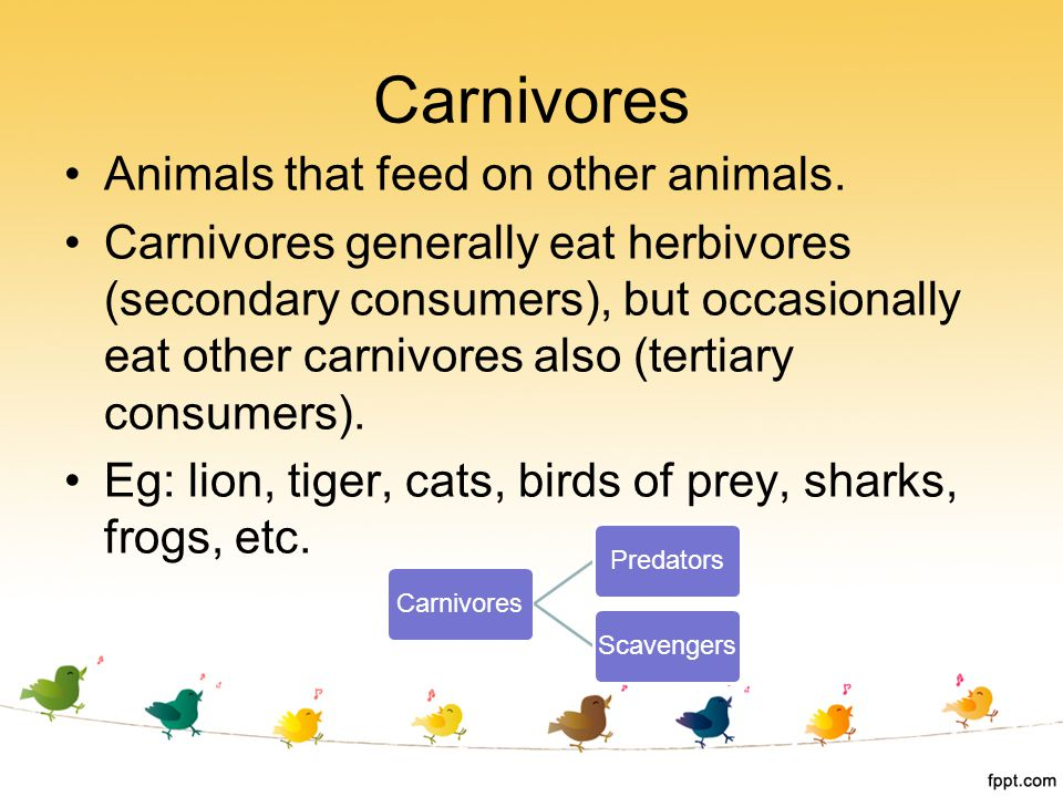Carnivores Animals that feed on other animals.