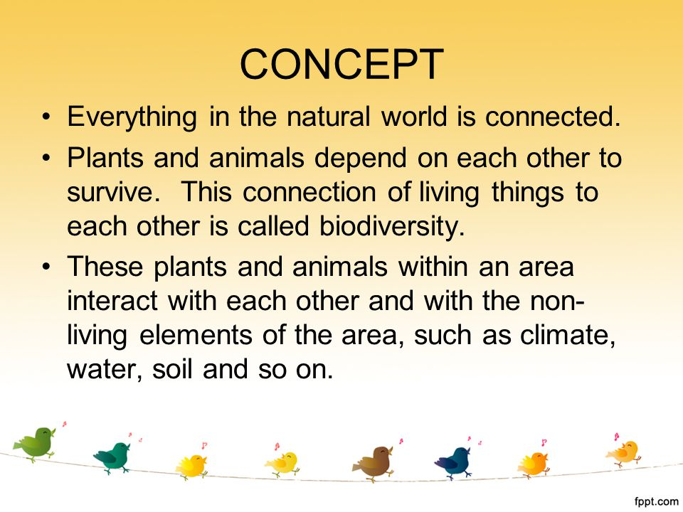 CONCEPT Everything in the natural world is connected.