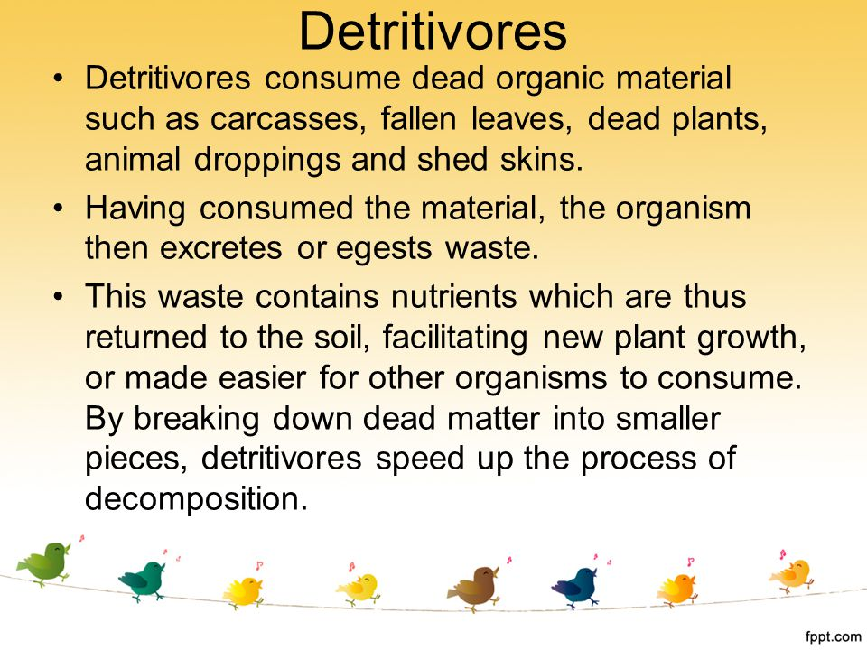 Detritivores Detritivores consume dead organic material such as carcasses, fallen leaves, dead plants, animal droppings and shed skins.