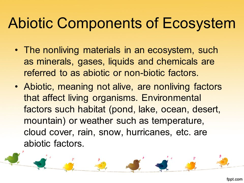 components of the ecosystem An ecosystem is a community of living and non-living things, and ecosystems can be as large as a desert or as small as a tree all components of an ecosystem work together to make it balanced -- every living species has a specific purpose, or niche, to keep the ecosystem healthy, and light from the.