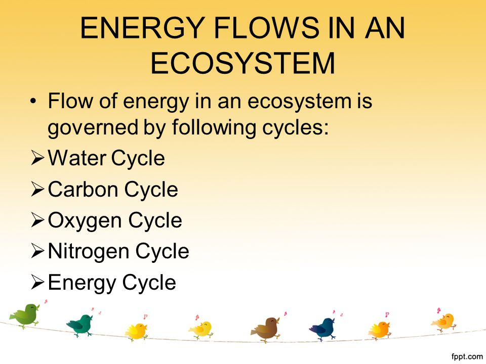ENERGY FLOWS IN AN ECOSYSTEM