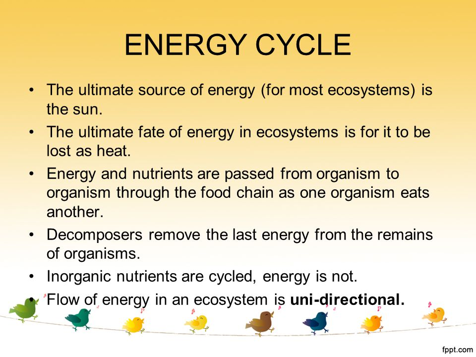 ENERGY CYCLE The ultimate source of energy (for most ecosystems) is the sun. The ultimate fate of energy in ecosystems is for it to be lost as heat.