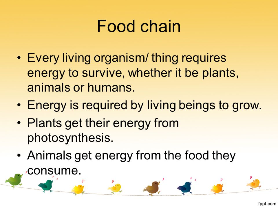 Food chain Every living organism/ thing requires energy to survive, whether it be plants, animals or humans.