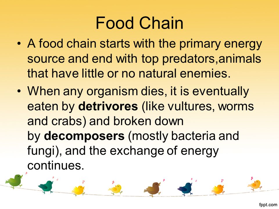 Food Chain A food chain starts with the primary energy source and end with top predators,animals that have little or no natural enemies.