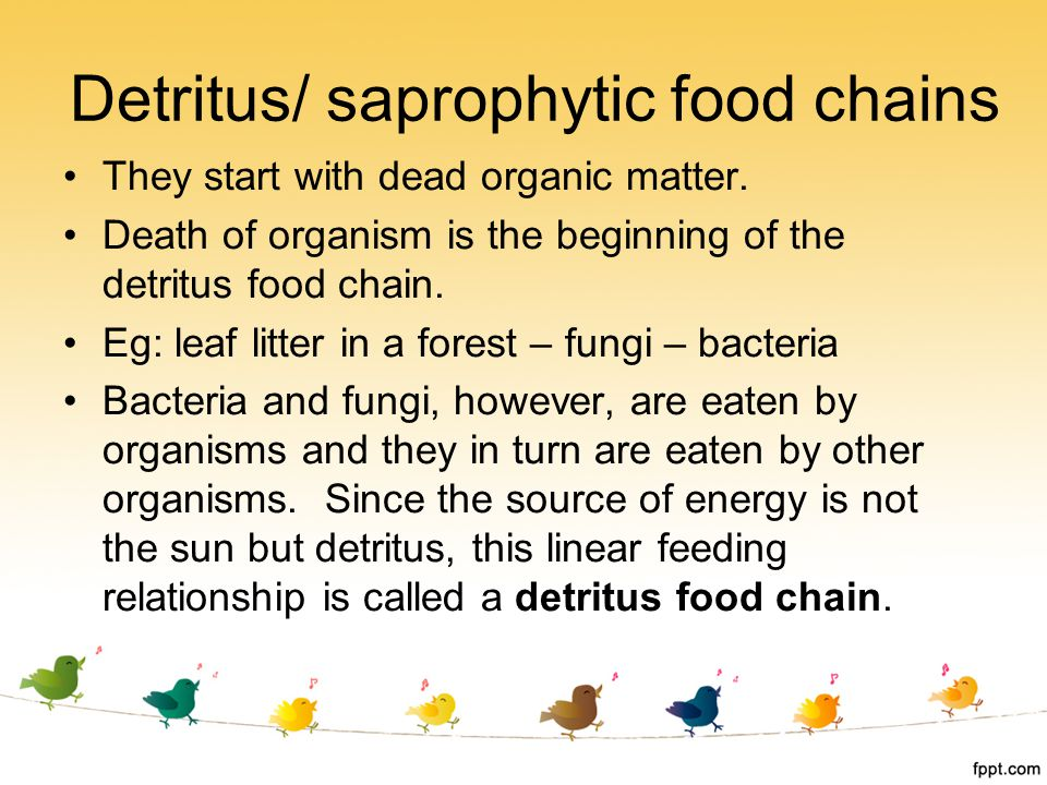 Detritus/ saprophytic food chains