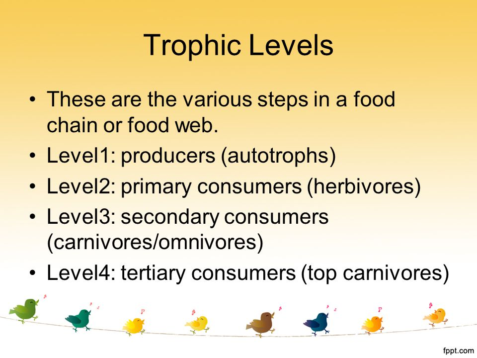 Trophic Levels These are the various steps in a food chain or food web. Level1: producers (autotrophs)