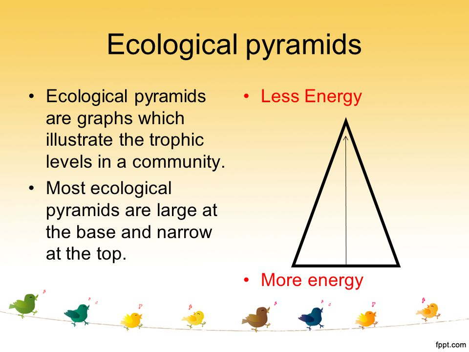 Ecological pyramids Ecological pyramids are graphs which illustrate the trophic levels in a community.