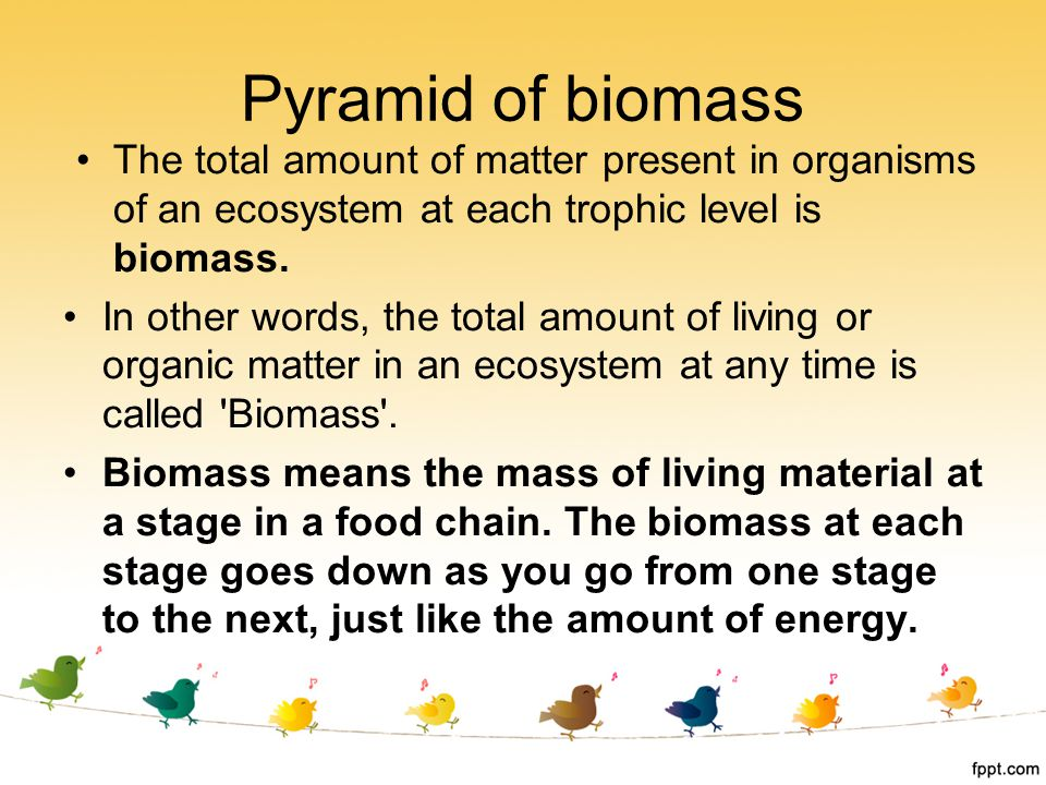 Pyramid of biomass The total amount of matter present in organisms of an ecosystem at each trophic level is biomass.