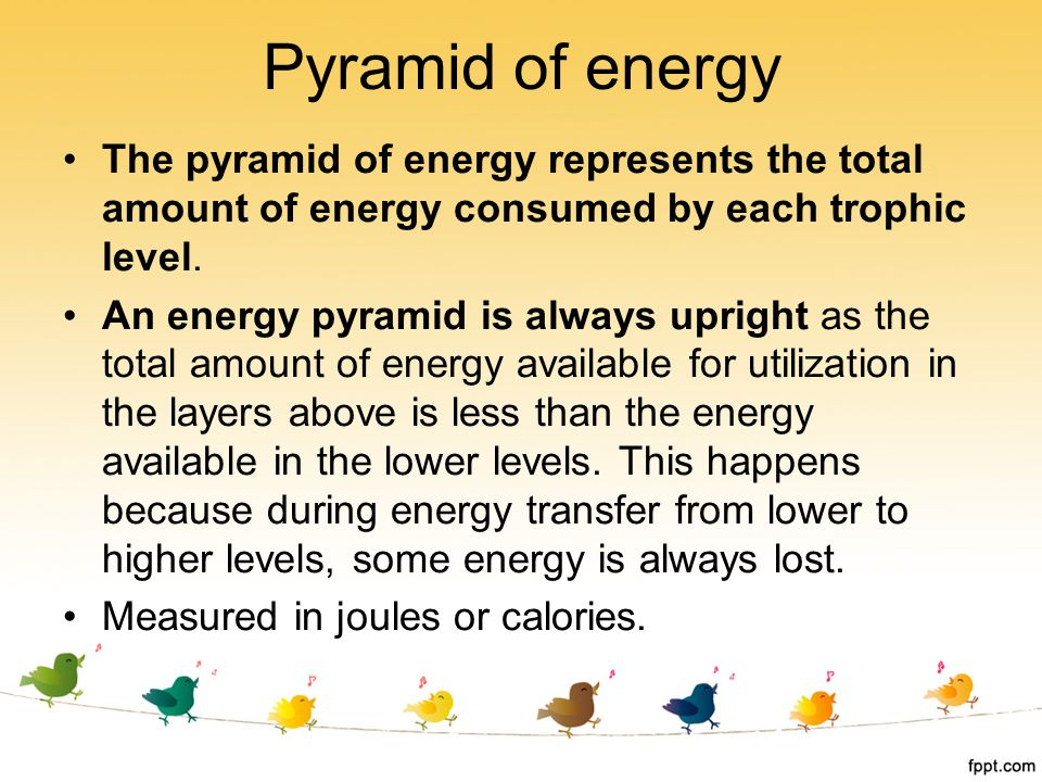 Pyramid of energy The pyramid of energy represents the total amount of energy consumed by each trophic level.