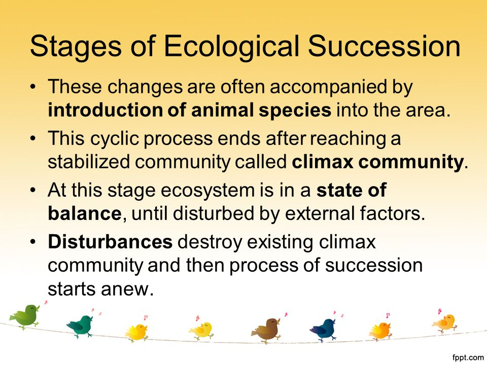 Stages of Ecological Succession