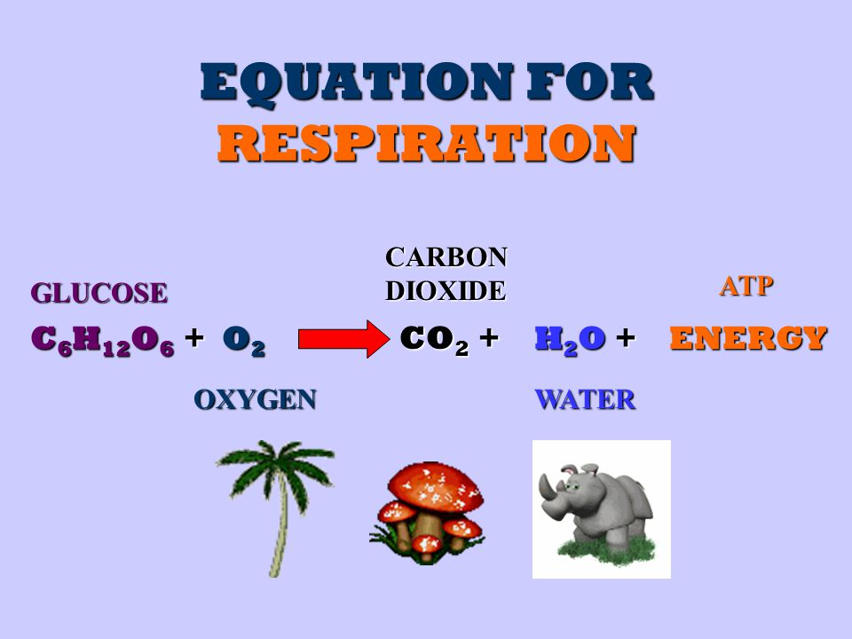 EQUATION FOR RESPIRATION