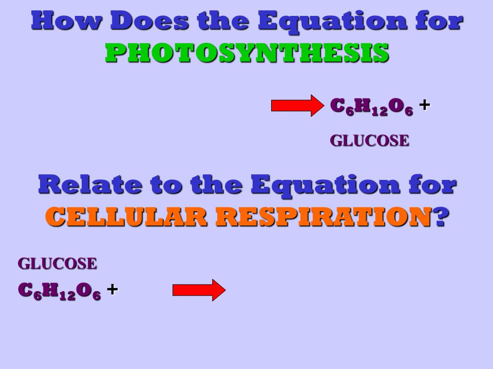 How Does the Equation for PHOTOSYNTHESIS