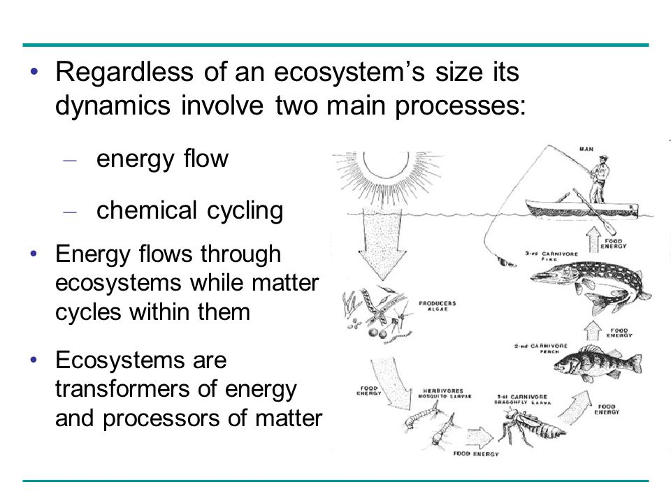 Regardless of an ecosystem's size its dynamics involve two main processes: